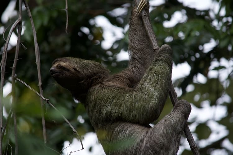 Best Places to see Sloths tree