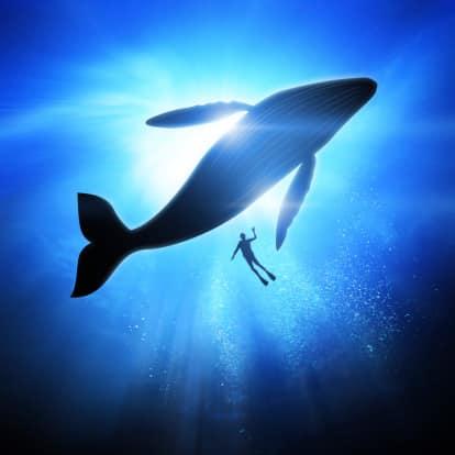 observación de ballenas y buceo