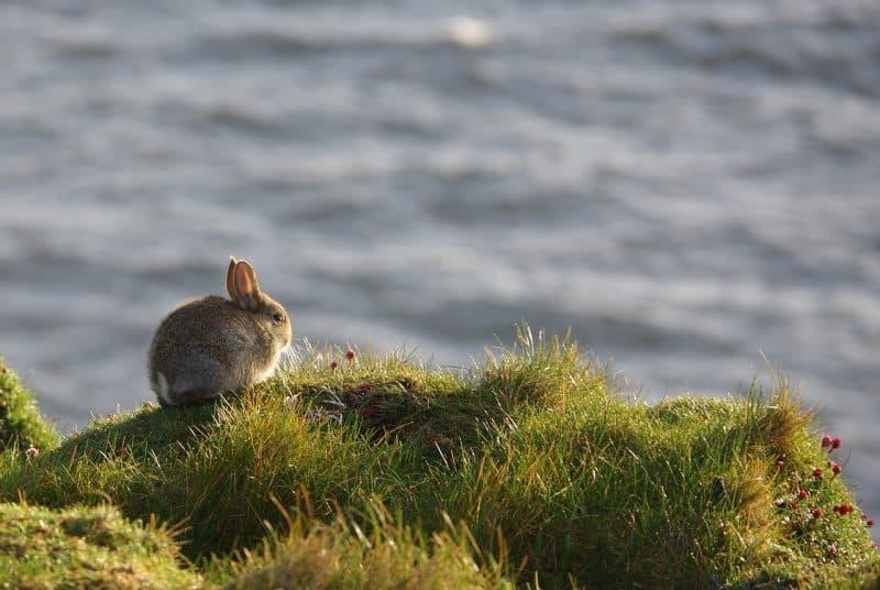 Rabbit on a bank