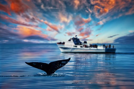 whale wildlife in california