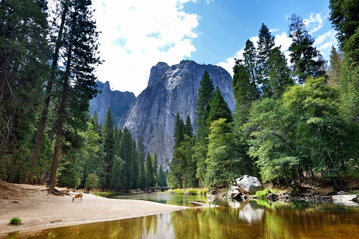 Where to see wildlife in the US:yosemite