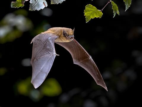 Where to see wildlife in the US:bats
