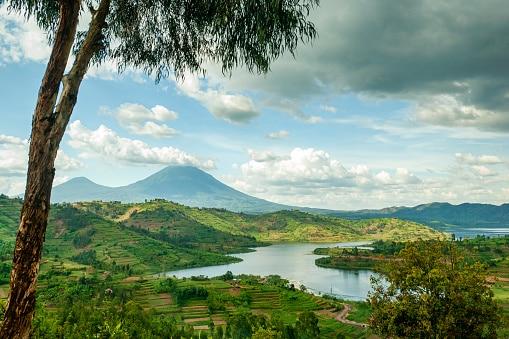 los 10 animales más amenazados rwanda