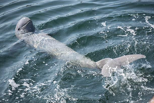 delfín los 10 animales más amenazados