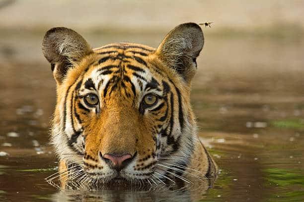 los 10 animales más amenazados