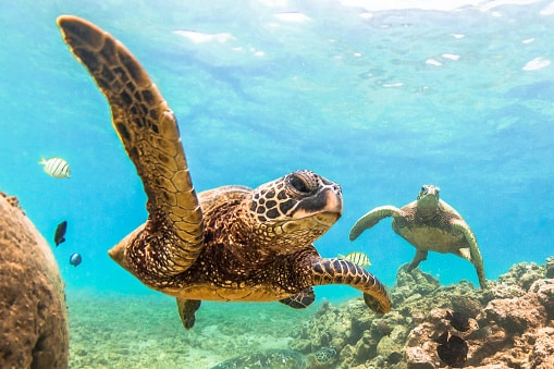Where to see wildlife in the US:turtles