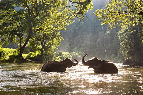elefantes asiáticos los 10 animales más amenazados