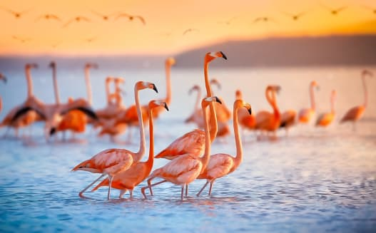 Where to see wildlife in the US:flamingos