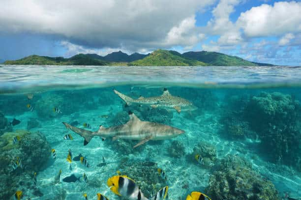 wildlife in the maldives
