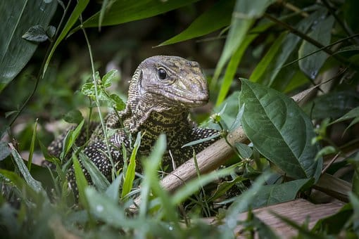 wildlife in vietnam