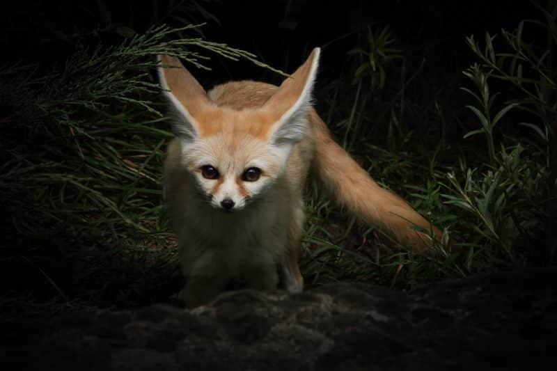 top 10 animales más bonitos zorro
