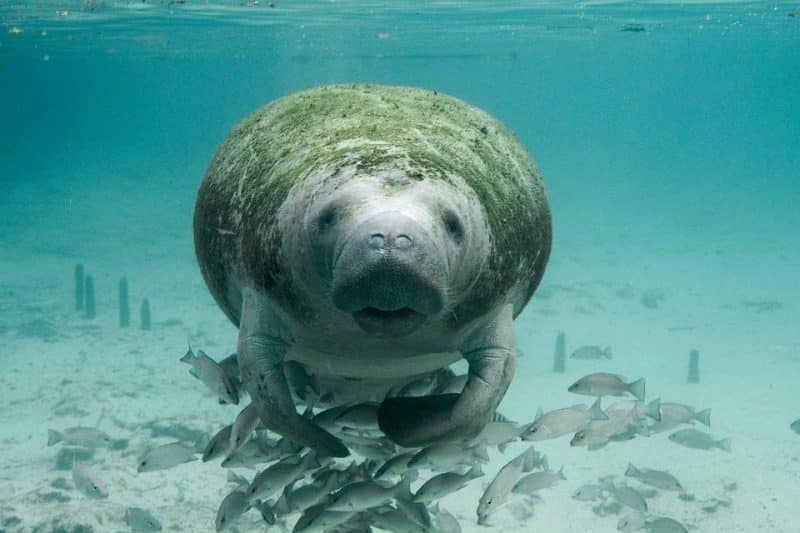 animals in the philippines: dugong