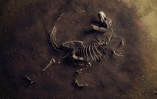 10 animales que se han extinguido recientemente dinosaurio