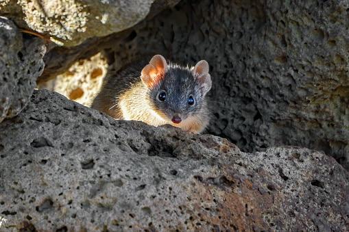 10 Animales que se han extinguido recientemente siguen a la musaraña