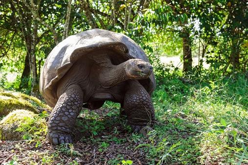 10 Animales que se han extinguido recientemente siguen a la tortuga