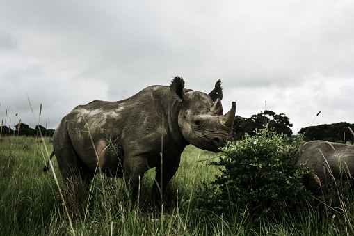 10 Animales que se han extinguido recientemente siguen al rinoceronte