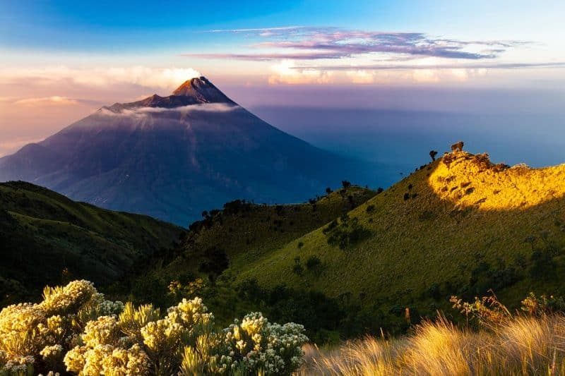 Vida salvaje en Indonesia: Bali