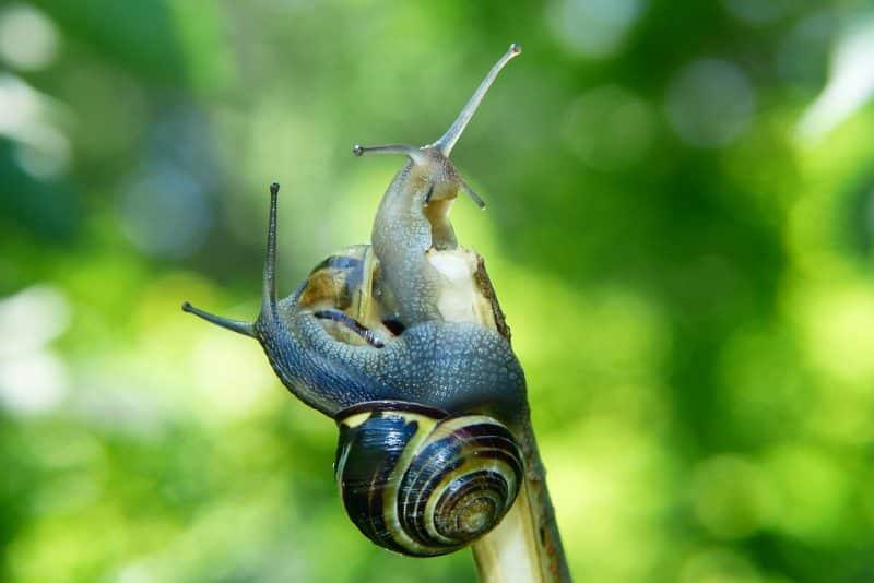 10 Animales que se han extinguido recientemente siguen al caracol